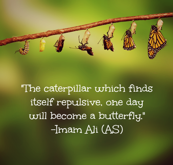 The caterpillar which finds itself repulsive. One day will become a butterfly.