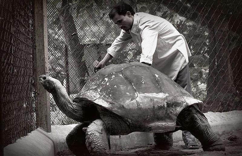 адвайта, гигантская черепаха, самая старая черепаха на Земле