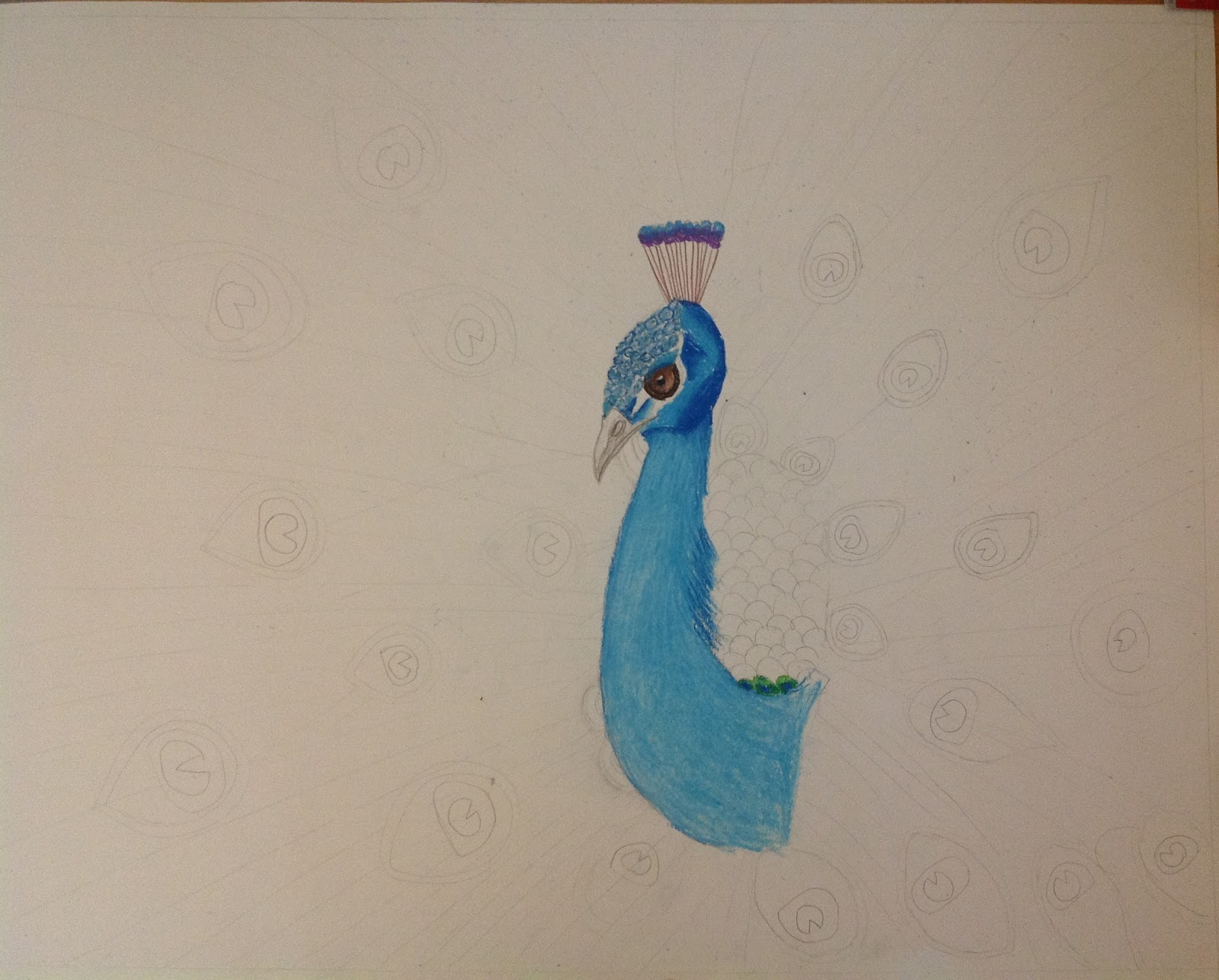 Peacock drawing step by step - photo#16