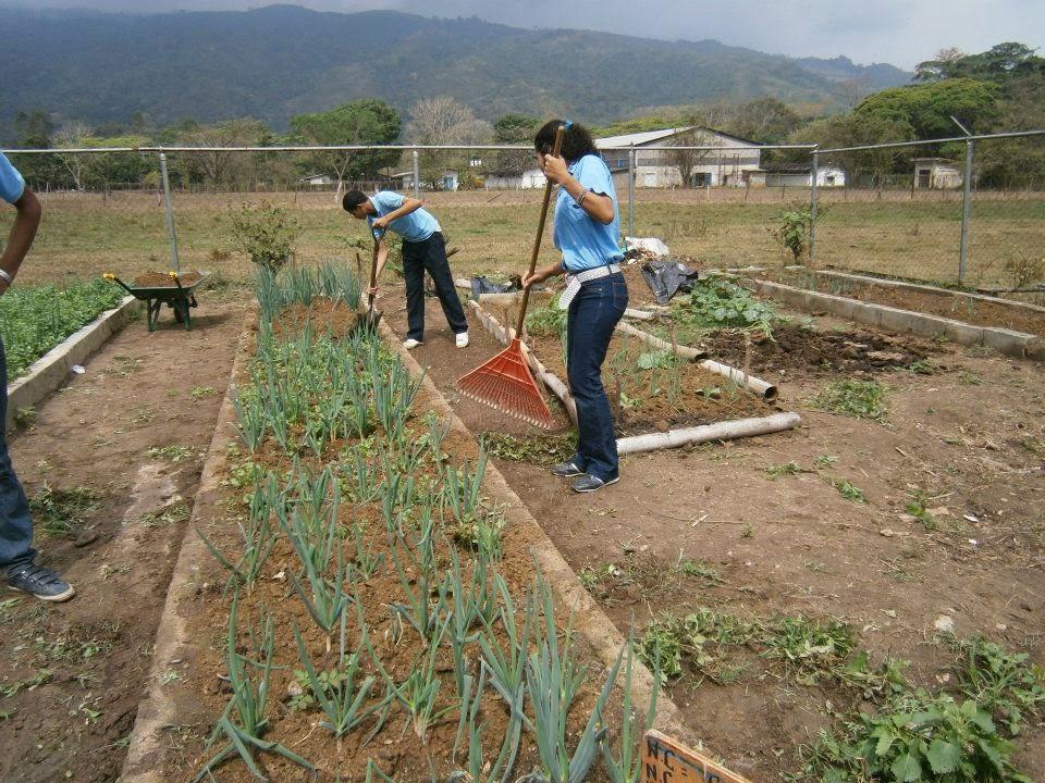 Aprendamos horticultura generalidades de la horticultura for Horticultura definicion