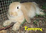 Tommy (BUCK)