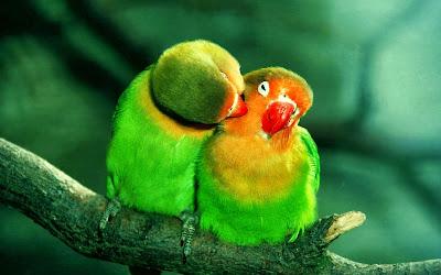 Las parejas de las Aves