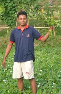 kangkung lombok - selamatkan anak indonesia dari kekurangan zat besi. saudagar kangkung lombok.