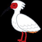 トキのイラスト(鳥)