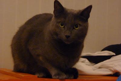 grå katt på orange träkista. foto: Reb Dutius