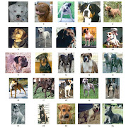 Popularity of Dog Breeds in Various Countries toptenbreeds