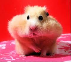 [Image: hamster%2Bhoarding.jpg]