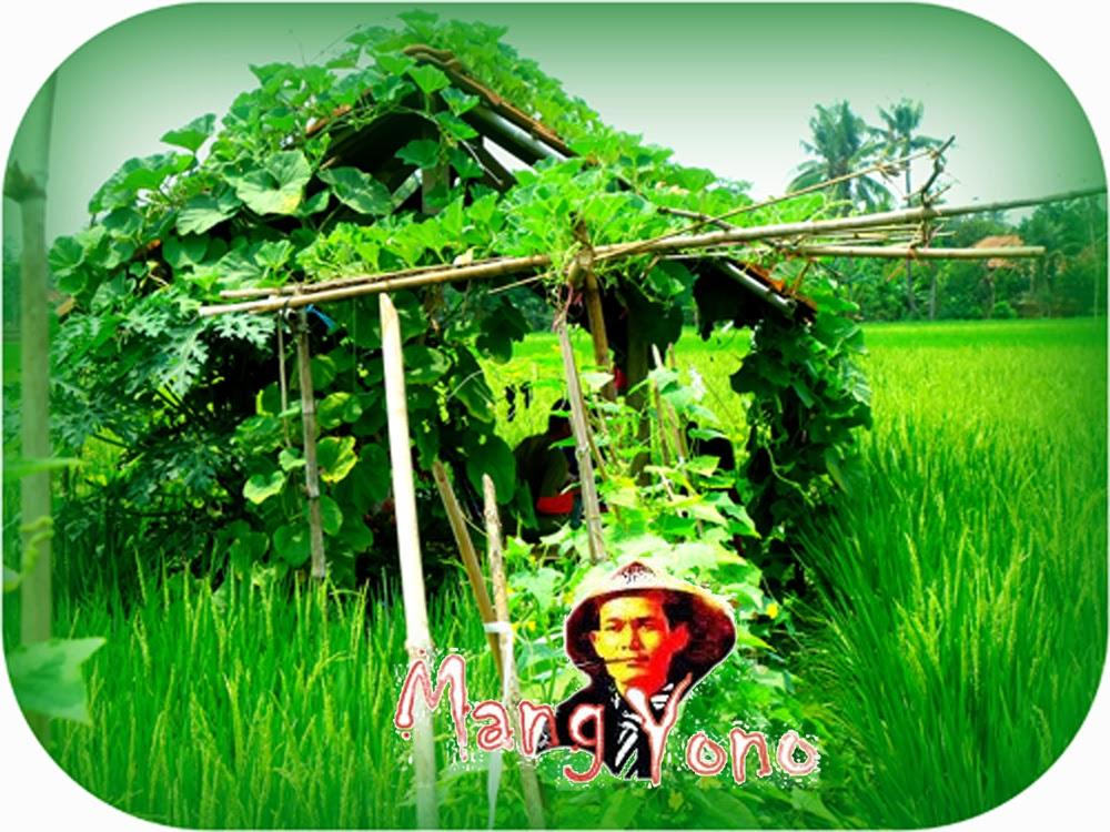 Celoteh dan harapan Seorang Petani Tanggung