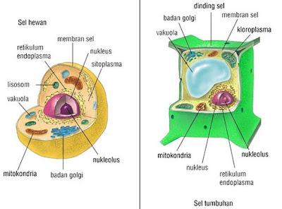 Penjelasan Struktur dan Fungsi Organel Sel