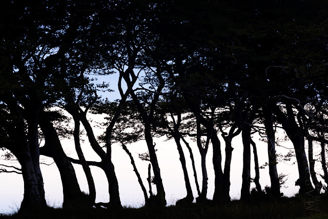 A group of trees stand in silhouette in Exmoor National Park by Martyn Ferry Photography