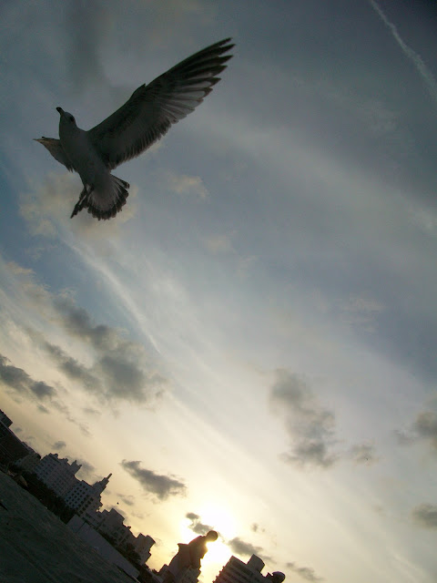 Seagulls,flying,bird