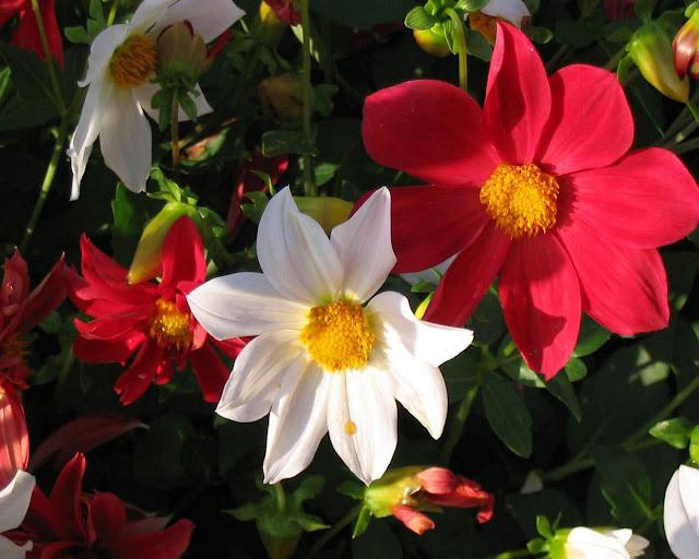 Wallpapers de Flores