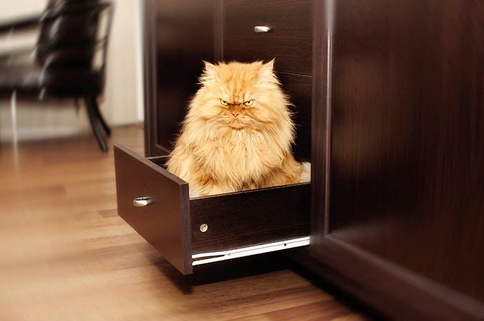 el gato mas enojado del mundo
