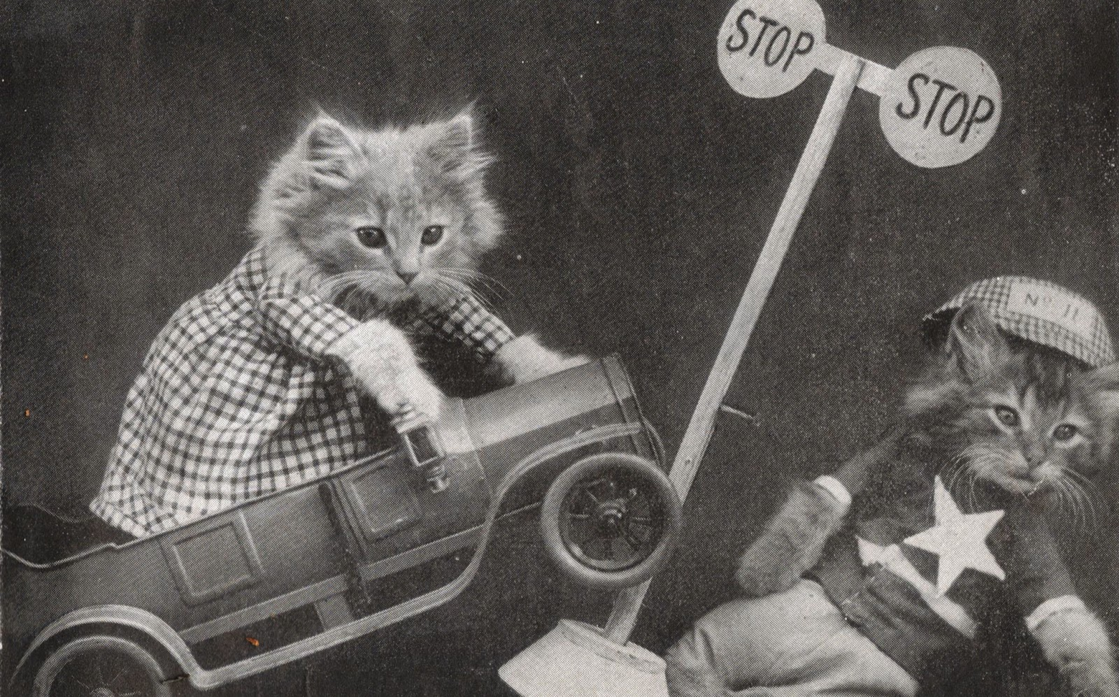 Vintage photo kitten driving a car