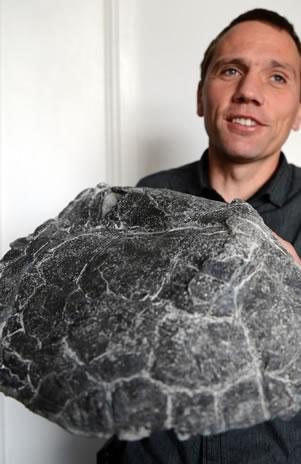 El fósil de la tortuga más antigua del mundo