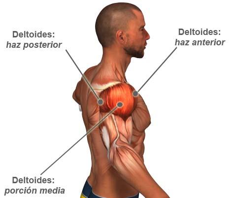 Aumentar Masa Muscular: Ejercicio Para Hombros Con Mancuernas ...