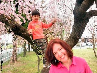 linda árvore de sakura