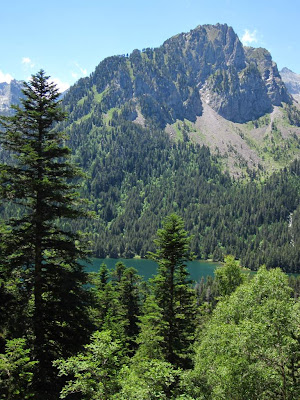 Fir trees and Llac de Sant Maurici in Aigüestortes National Park