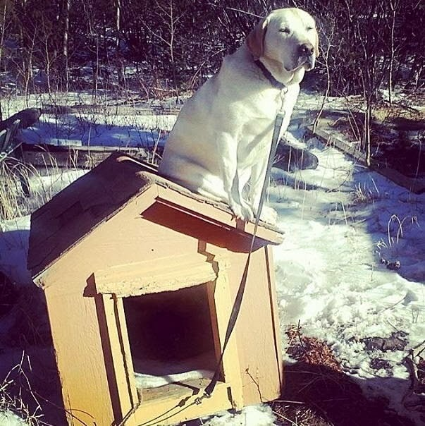 Cute dogs - part 6 (50 pics), dog sits on the roof of his dog house