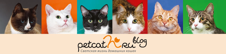 Светская жизнь домашних кошек