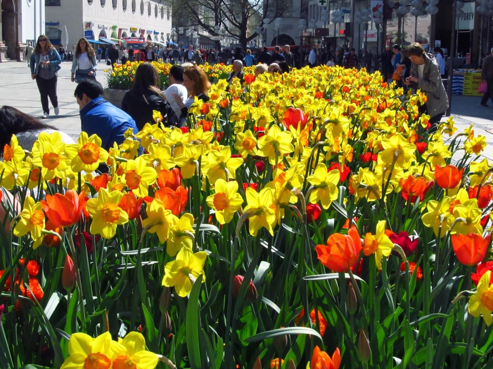 картинки цветов уличных: