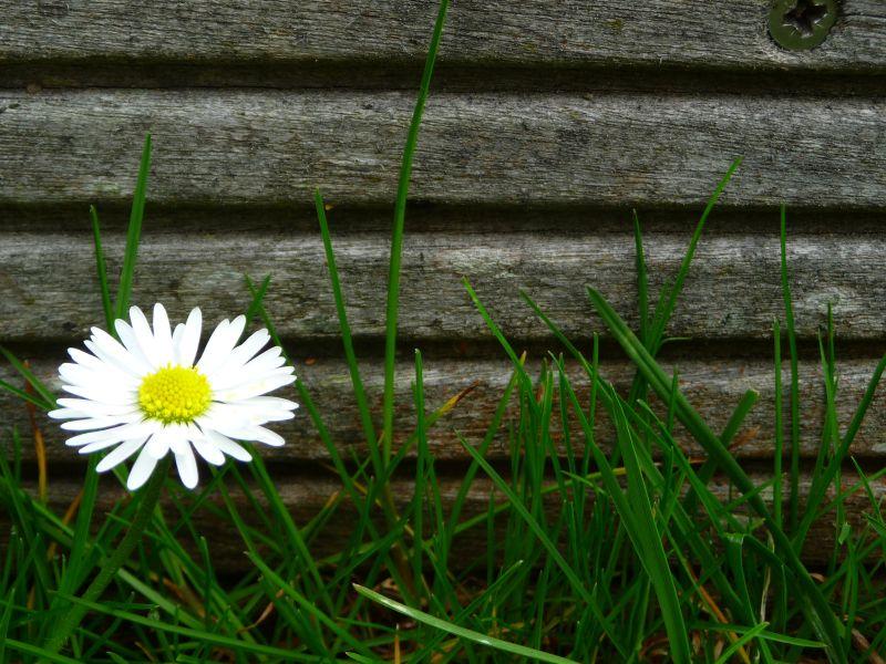 Unser Rasen ist eine Wiese.