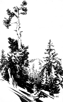 Mountain Hemlock on Mt. Shasta