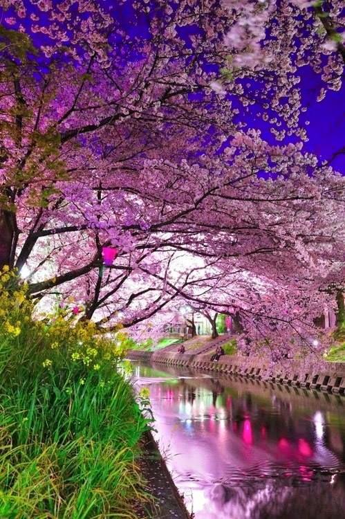 Voilet Flowers Skaura Japan