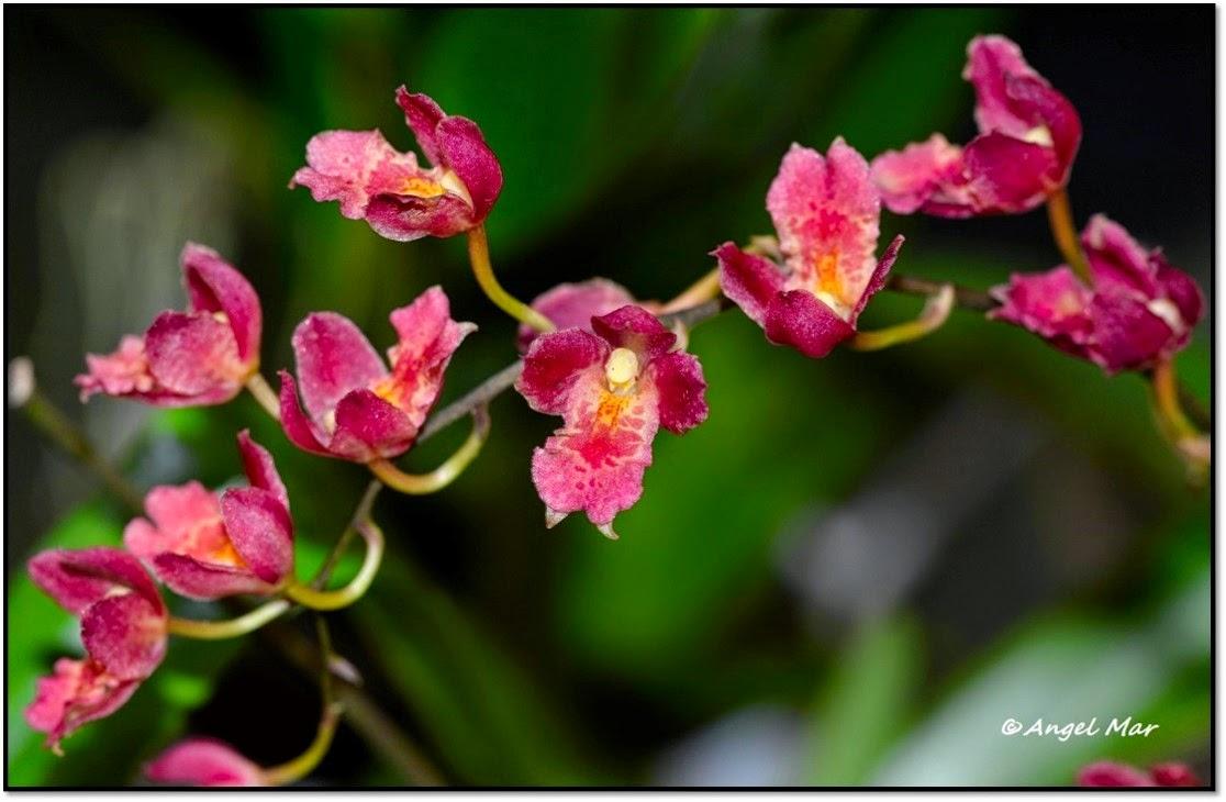 Imagenes De Flores Fantasticas - ORQUÍDEAS FANTÁSTICAS DE COLOMBIA