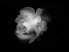 Il fiore si nasconde nell'erba, ma il vento sparge il suo profumo!