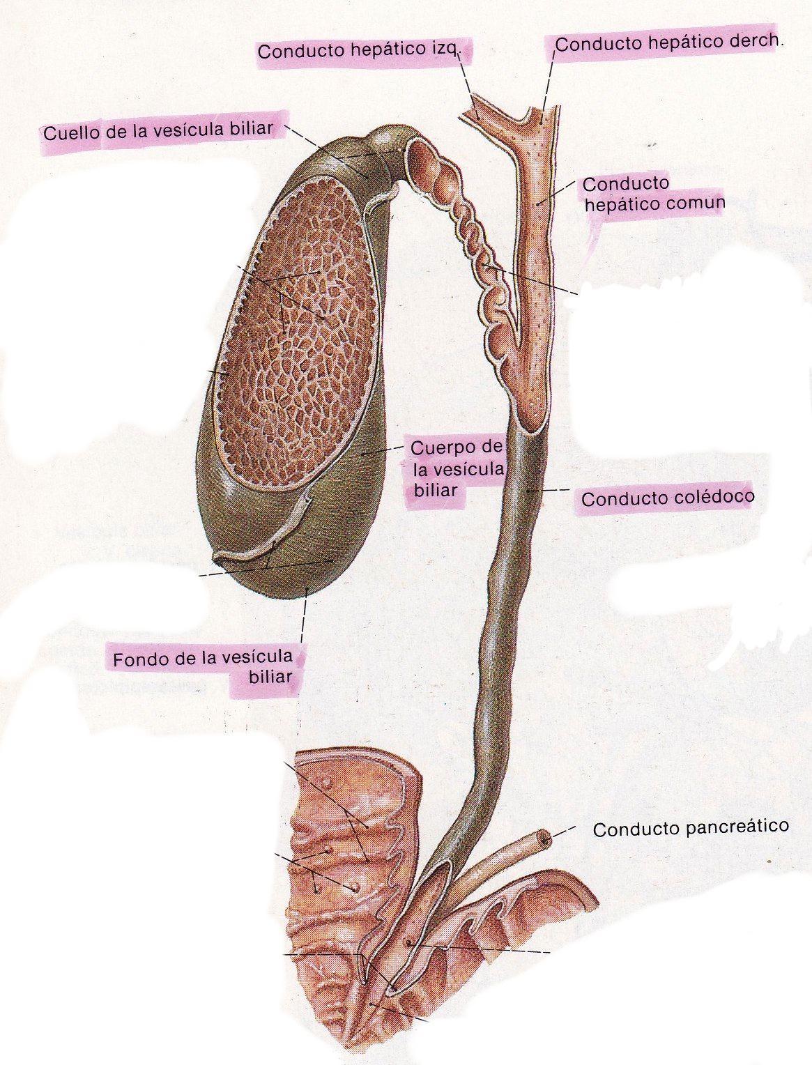 Sobre algunos tópicos quirúrgicos...: ¡Tengo piedras en la vesícula!