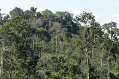 Hutan Amazon Terbentuk 2.000 Tahun Lalu karena Perubahan Iklim