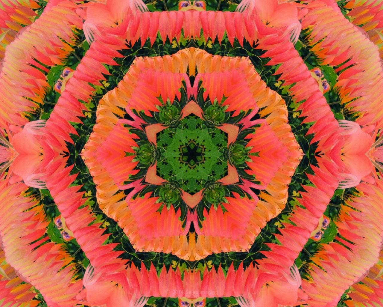 Kaleidoscope Photo Art Tulips by Jeanne Selep