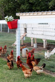Chicken Coop Plans Available