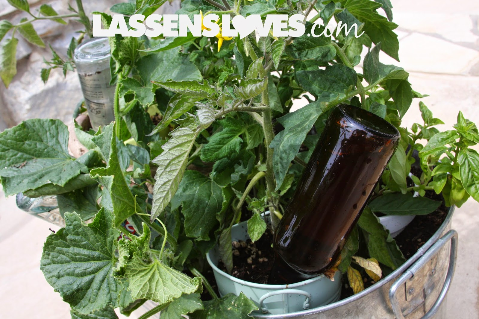 container+gardening, watering+container+plants