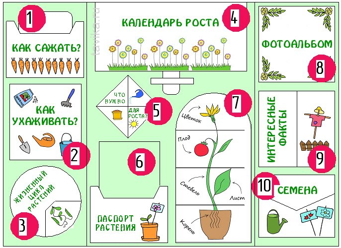 "lapbook ""My garden"""