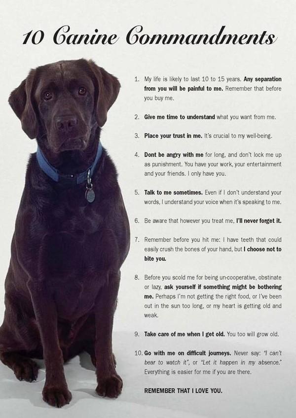 10 Canine Commandments, funny dog pics, dog commandments, pets