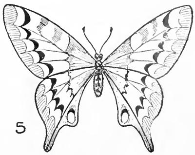 Corso Di Grafica E Disegno Per Imparare A Disegnare Come Disegnare