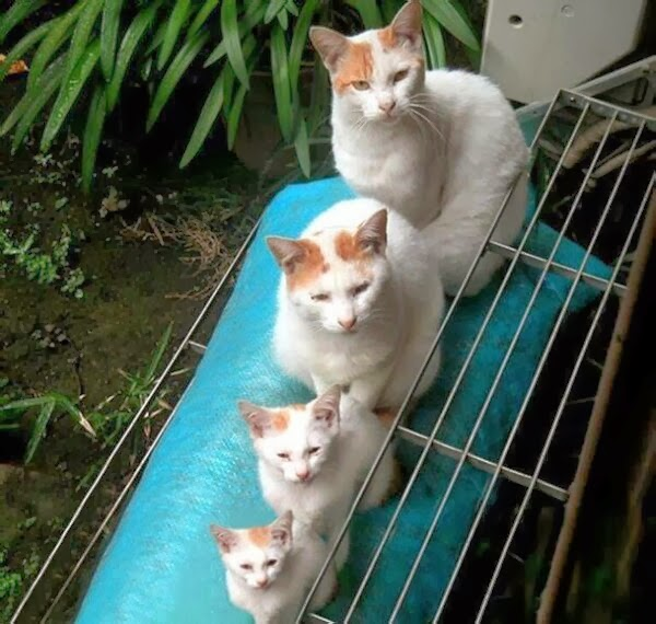 Funny cats - part 91 (40 pics + 10 gifs), four cats with same color