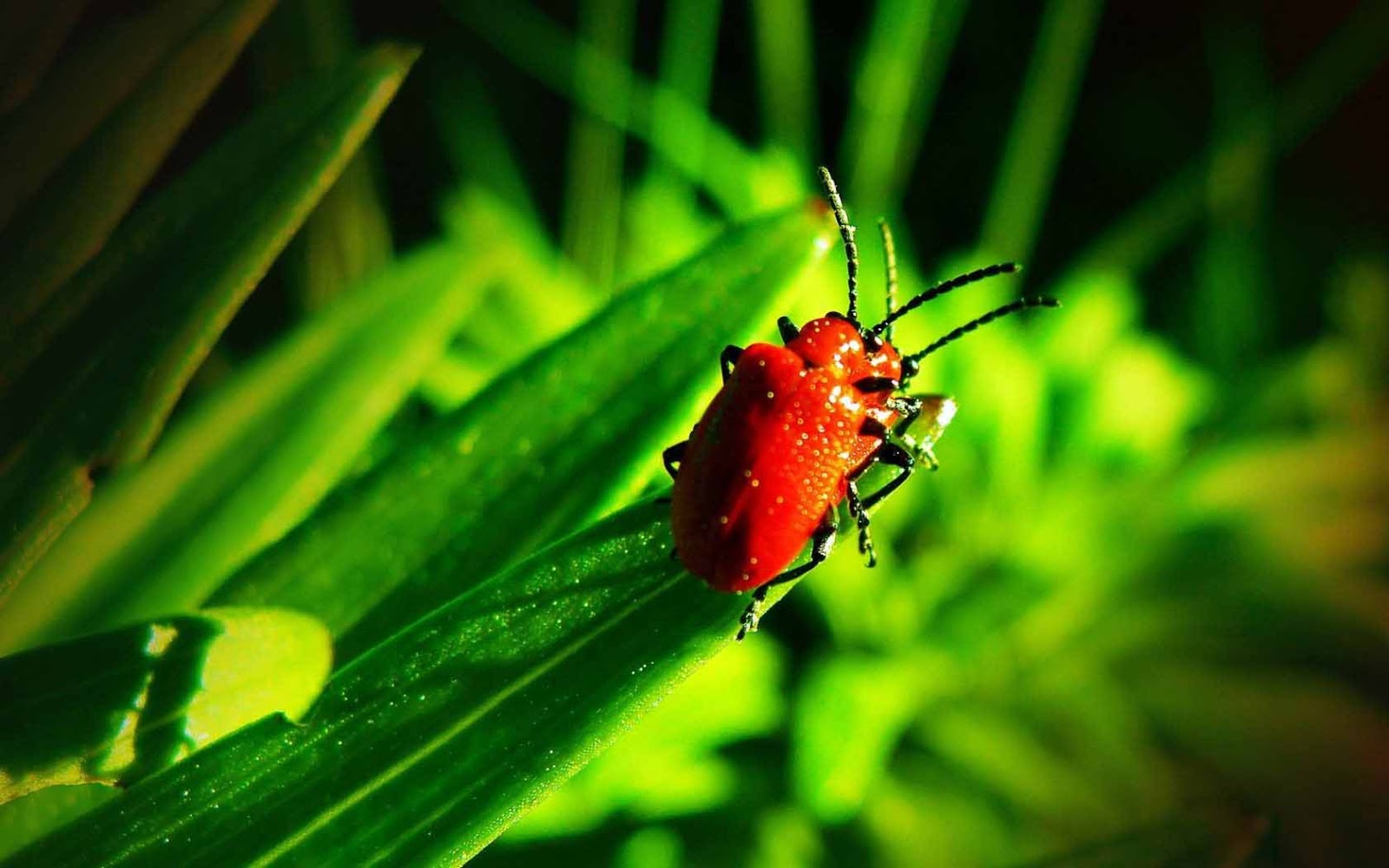Insects HD Pictures | HD Wallpapers