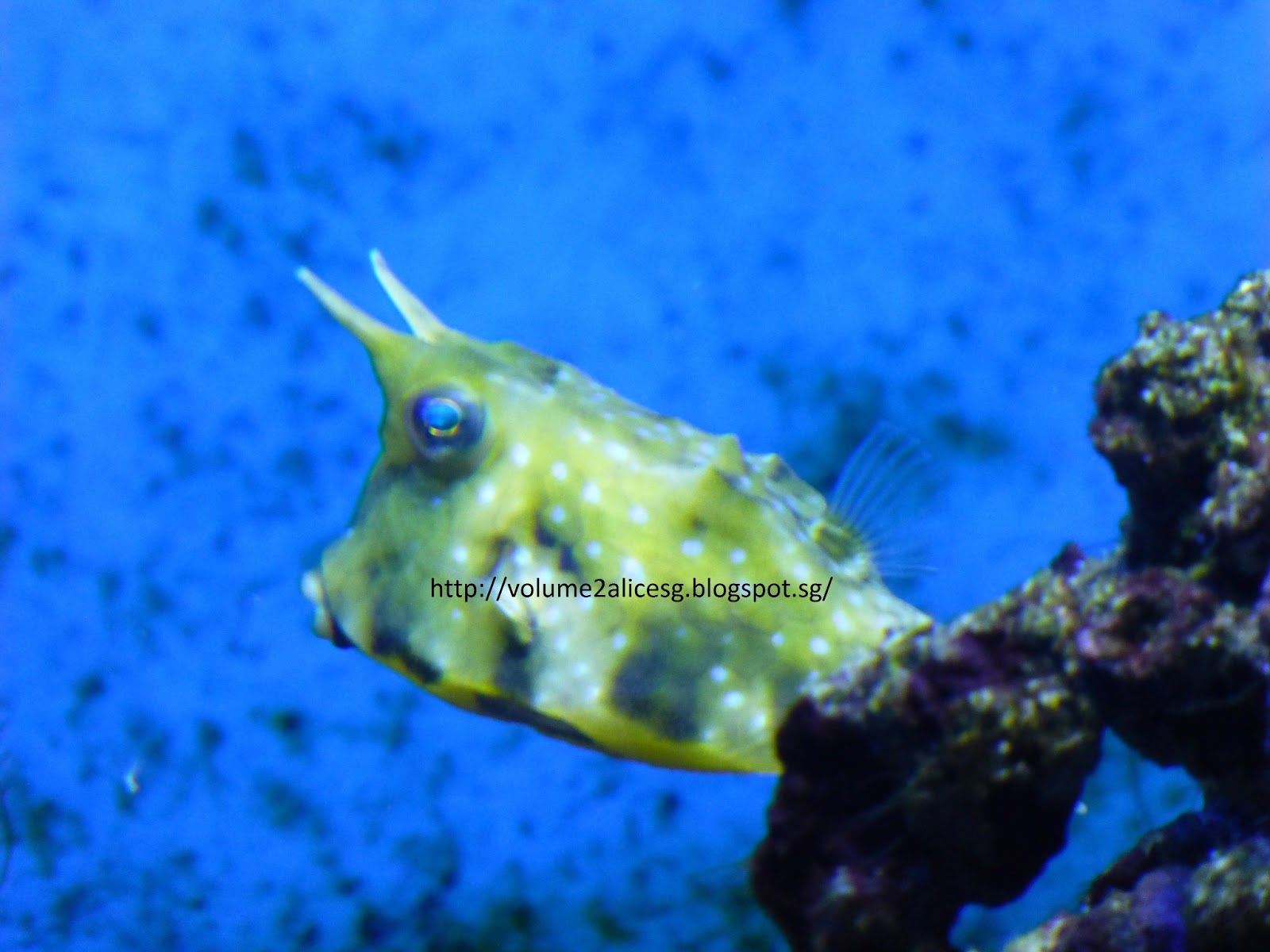 Fish aquarium in sentosa - There S So Much To View And So Many Different Species Of The Fishes That Many I Am So Alien With If Not Mistaken The Below Fish Is The Long Horn Cowfish