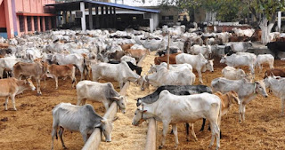 Herdsmen killings: Christians in Imo reject ranching