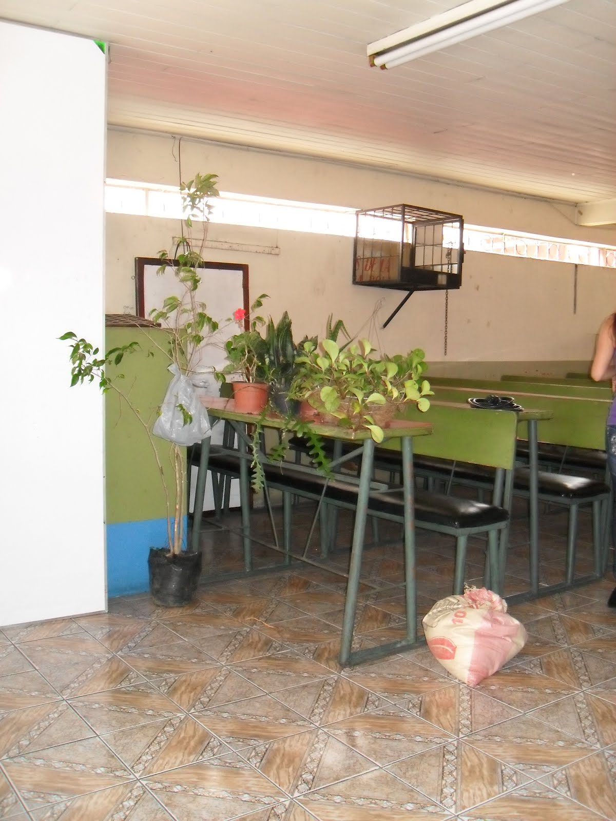 Mantenimiento y dise o de jardines charla manejo de for Tres plantas ornamentales