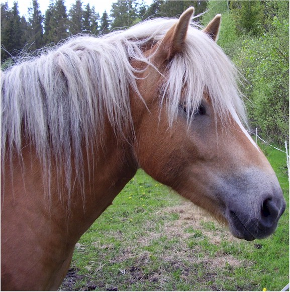 Horse Face Encyclopedia: Horse fa...