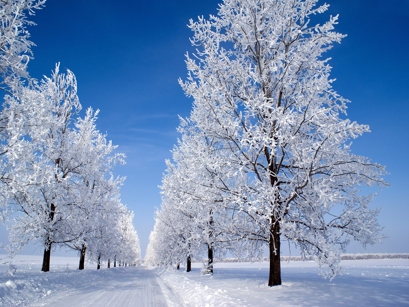 Snow Scenes Natural Beauty Snowfall HD Wallpapers Images Pictures