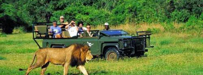 Couverture facebook lion afrique du sud