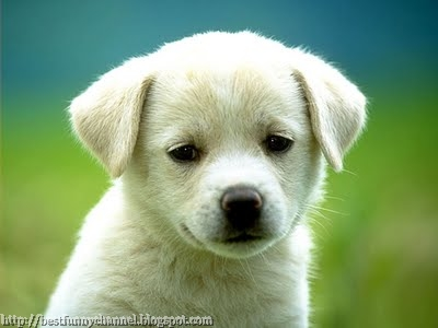 Beautiful white puppy.