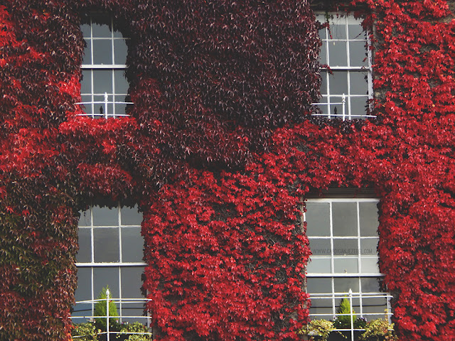 red leaves growing over a building with four windows