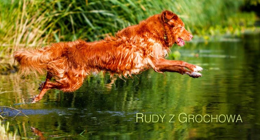 Rudy z Grochowa