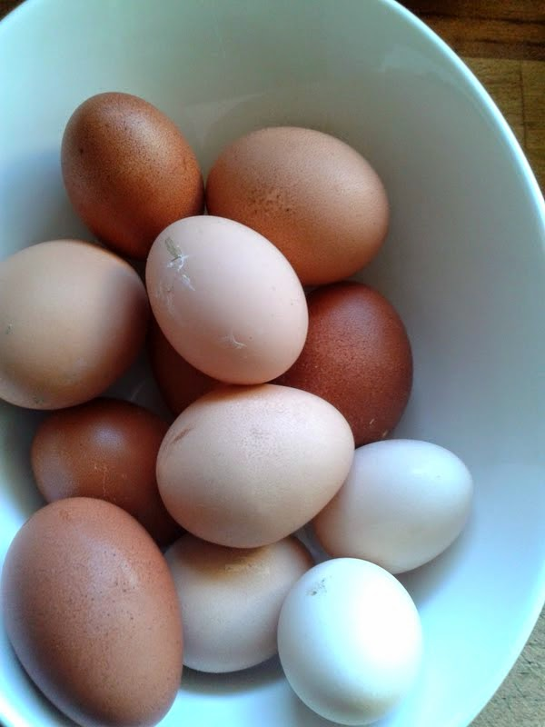 Hühnerfreuden